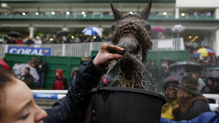 Well deserved: a thirsty Mountainous drinks some water after his second Welsh National triumph