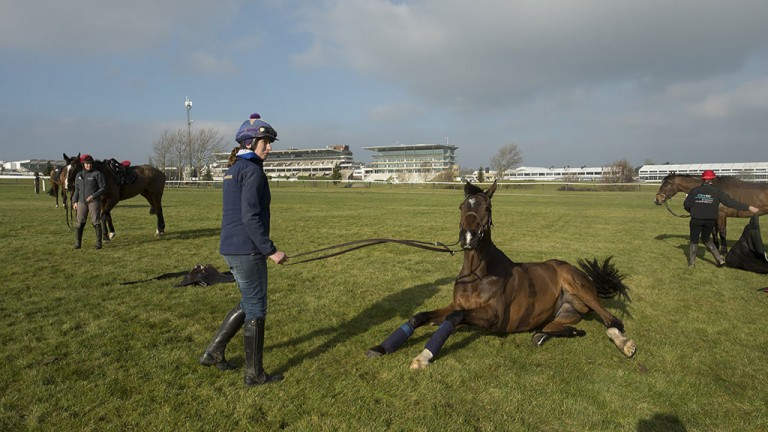 Time to relax: groom Gail Carlisle watches on as Arkle favourite Douvan takes a roll