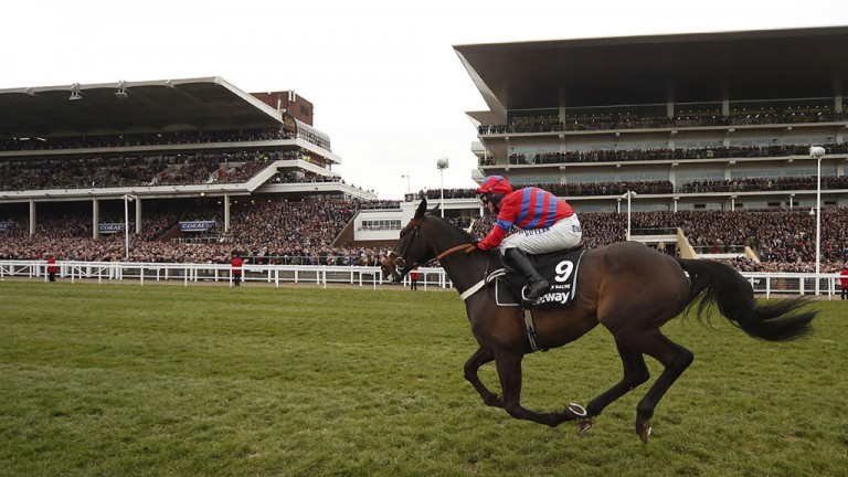 Sprinter Sacre on his way to winning his second Champion Chase last March