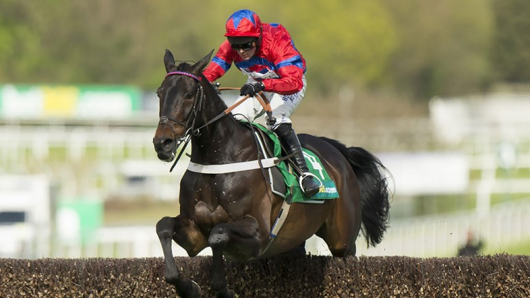 Sprinter Sacre: clears the last en route to winning the Celebration Chase at Sandown