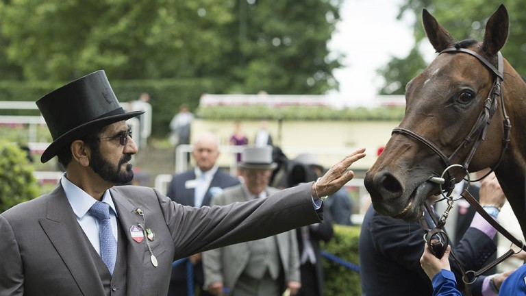 Pride and joy: Sheikh Mohammad shares a moment with Duke of Cambridge Stakes winner Usherette