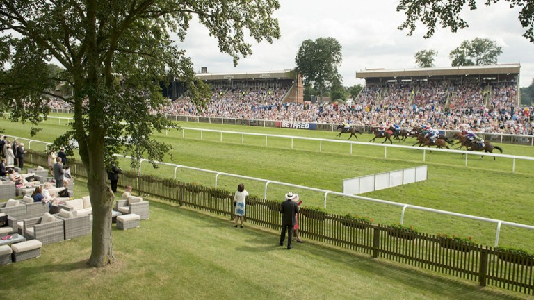 View from the trees: a look at the action from the other side of Newmarket's July course as the runners flash home in the first division of the fillies' maiden