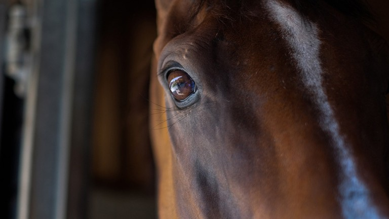 Eye spy: a striking close-up of the Laura Mongan-trained First Avenue during the Epsom open day