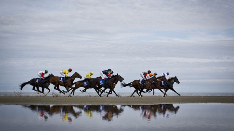 Sand stormers: the runners in the maiden gallop along the beach at Laytown