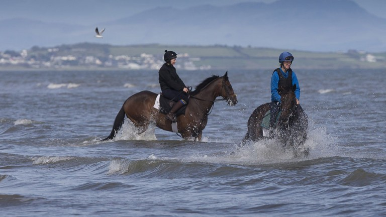Seaside sizzler: two horses keep cool by splashing about in the sea at Laytown