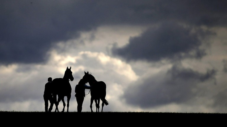 The long walk back: horses head back to the stables having run in the nursery on a cloudy day at HQ at Newmarket