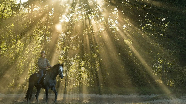 Something to brighten the morning: a horse is caught in a heavenly glow on the Chantilly gallops on the morning after the Arc meeting