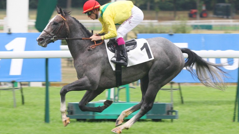 Morandi: won the Group 1 Criterium de Saint-Cloud