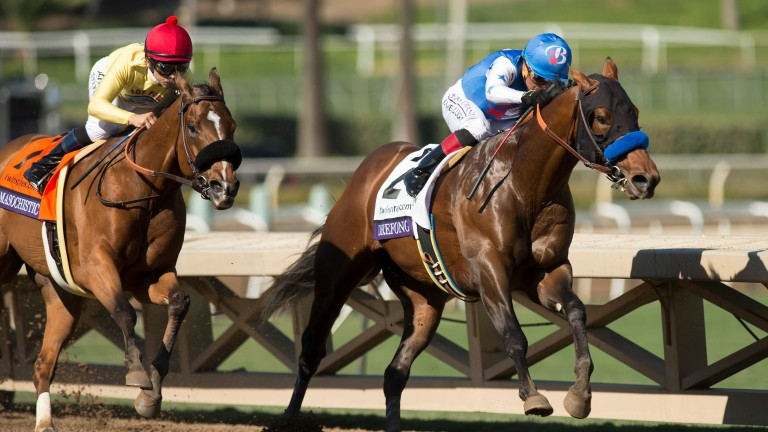 Drefong (Martin Garcia,right) rounds the bend and wins the Sprint from MasochisticSanta Anita 5.11.16 Pic: Edward Whitaker
