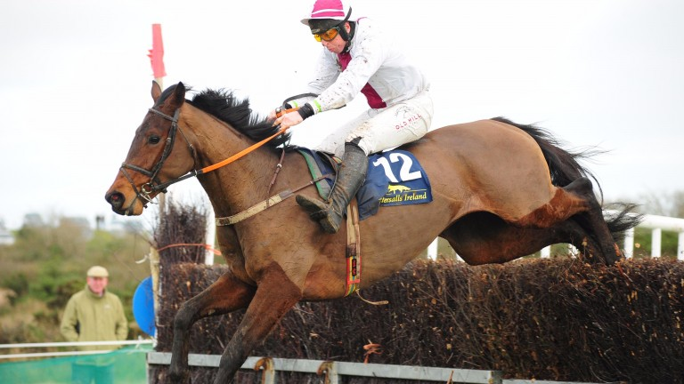 Minellafordollars: successful on his only start at Lingstown point-to-points in December