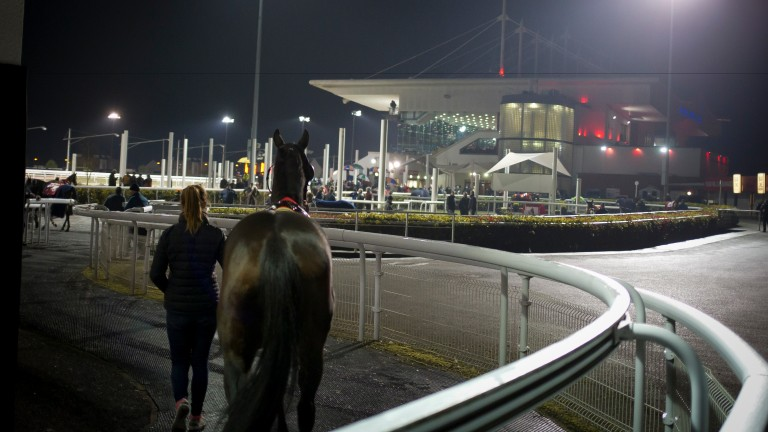 Horses parade under the lights at Dundalk Stadium
