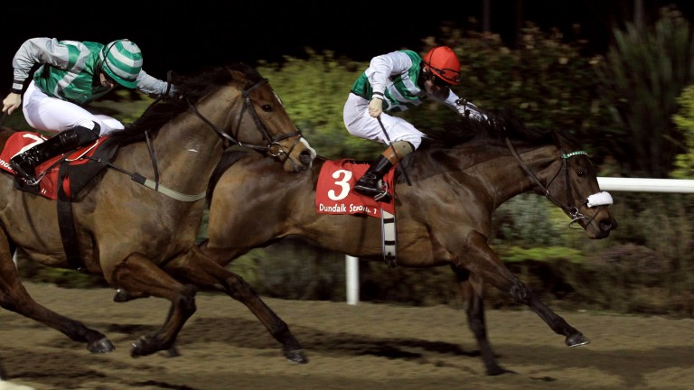 Chiclet: back to try and repeat last year's success in the Racing Post Handicap at Dundalk on Wednesday