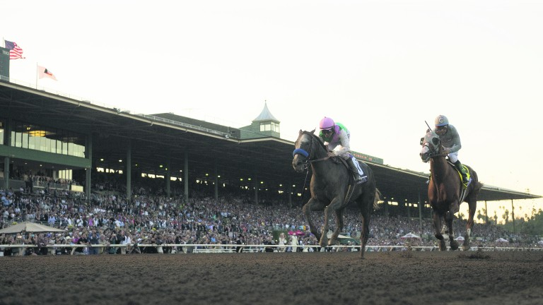 Arrogate (pink cap): three-year-old could warm up at Santa Anita for the world's richest race