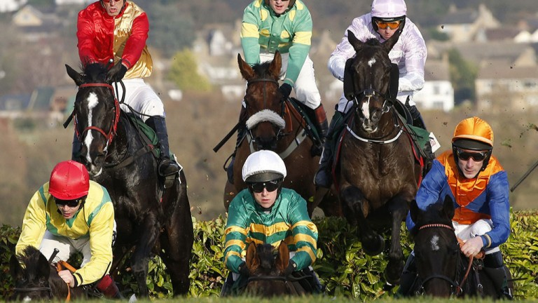 Bunched up: the field in the cross-country chase at Cheltenham negotiate the contours of the unique track