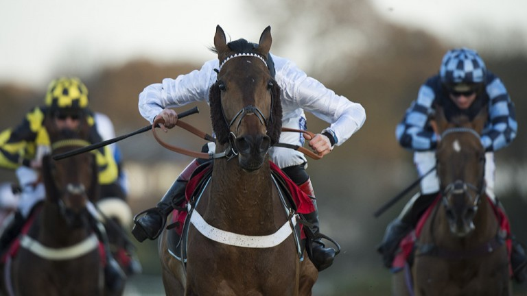 Where's the jockey?: Sam Twiston-Davies pictured in full drive aboard winner Brain Power in the Listed Jumeirah Hotels And Resorts December Handicap Hurdle at Sandown