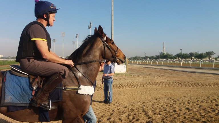 Scarlet Dragon with work rider Derek Byrne yesterday morning