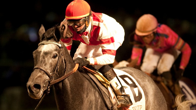 Unrivaled Belle: sold for $3.8 million at the Keeneland November Sale in foal to Tapit
