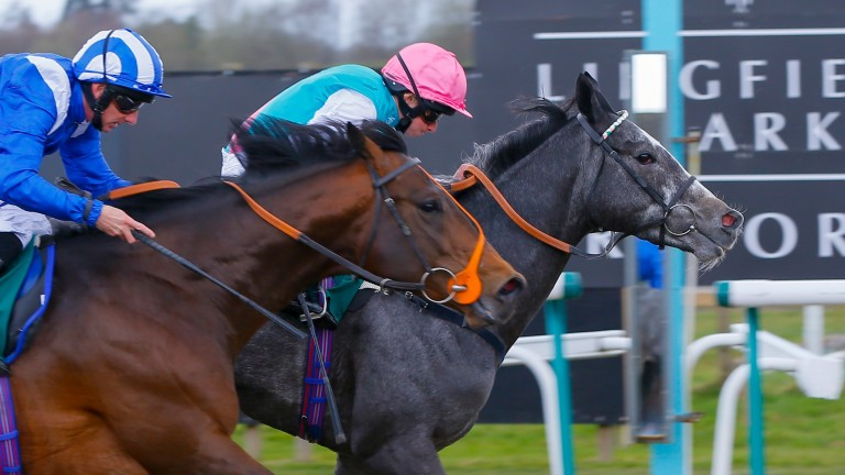 Another recent head-bobbing finish at Lingfield