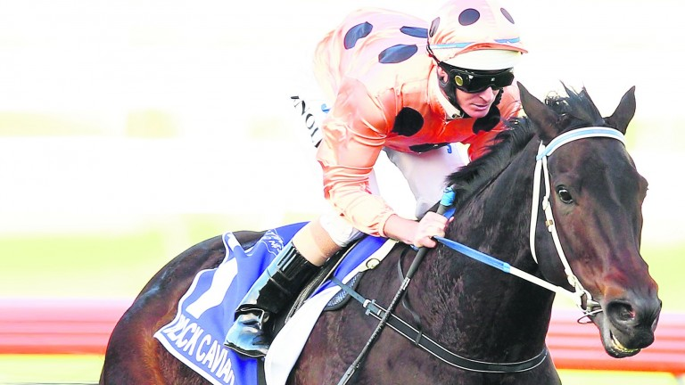 Black Caviar will be represented by her first foal, Oscietra, at Flemington on Sunday