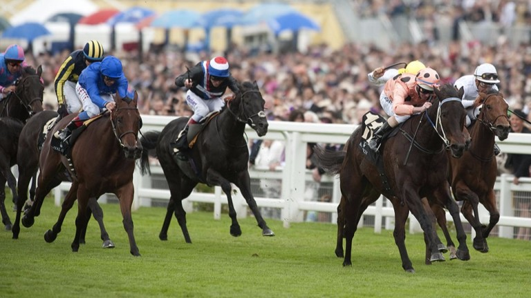 Black Caviar (salmon silks): graced the turf at Royal Ascot when landing the Diamond Jubilee Stakes in 2012
