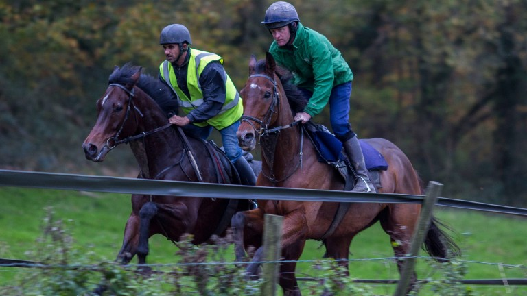 Sartorial Elegance (far side) in action on the gallops with his illustrious stable companion Cue Card