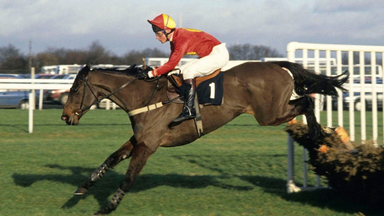 Flakey Dove: Struck a blow for the Price family in 1994