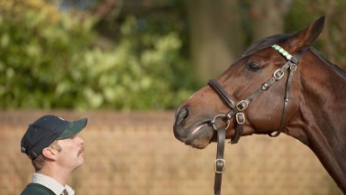 Frankel saw his European yearling average climb to 477,254gns in 2016