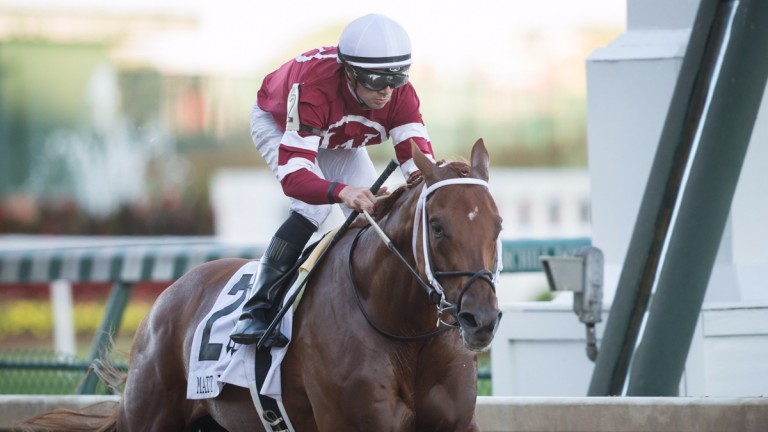 Gun Runner: made the breakthrough at Grade 1 level in November