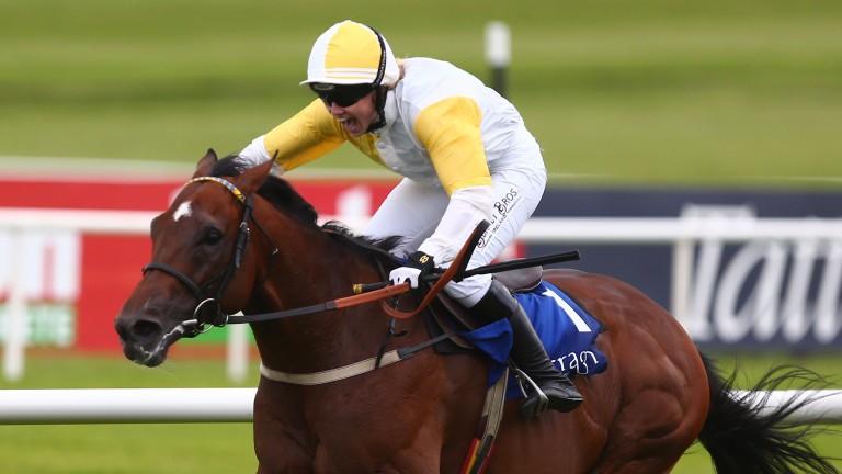 Vivat Rex wins a charity race at The Curragh last July