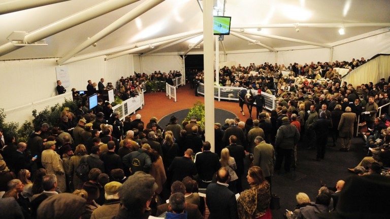 Tattersalls Ireland: last year's Cheltenham May Sale saw Redhotfillypeppers sell for £200,000