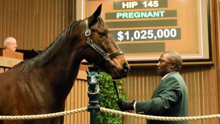 Siren Serenade: sells for $1,025,000 at the Keeneland January Sale