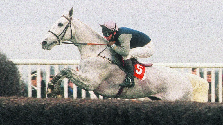 Picture perfect: four-time King George winner Desert Orchid was a firm favourite with racegoers