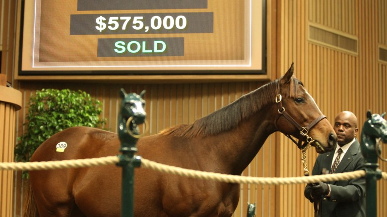 Joyfully: five-year-old daughter of Mineshaft brings $575,000 at Keeneland