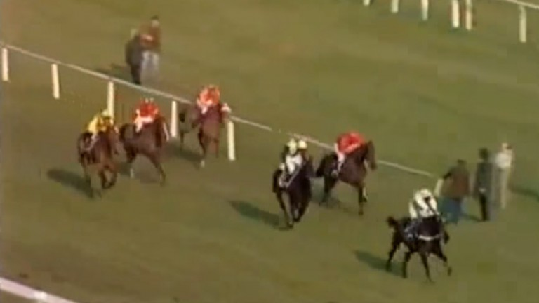 Day to remember: Stans Pride (second left) heads up the hill in the 1985 Champion Hurdle