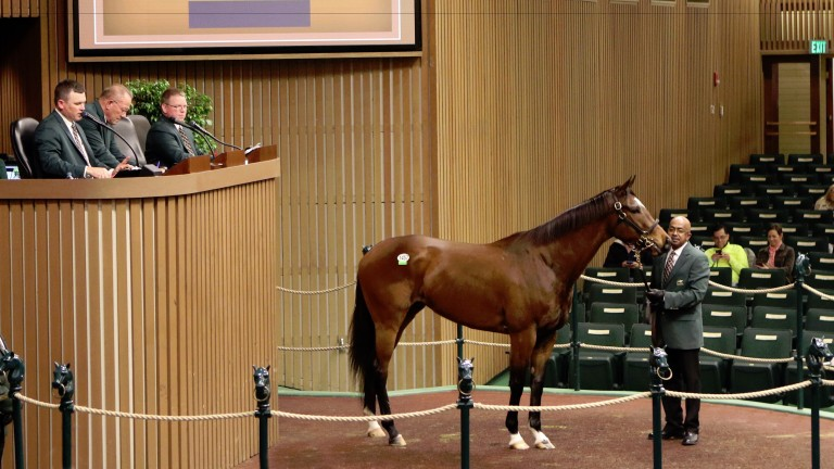 Dixie Victory selling in the ring at Keeneland