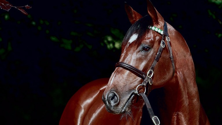 Frankel: his progeny are no strangers to success in France