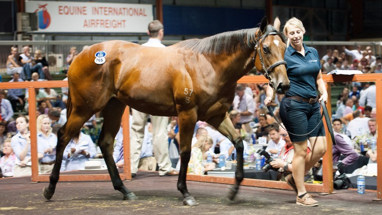 The Fastnet Rock filly out of Dazzling Gazelle bought by Coolmore for A$1.2 million