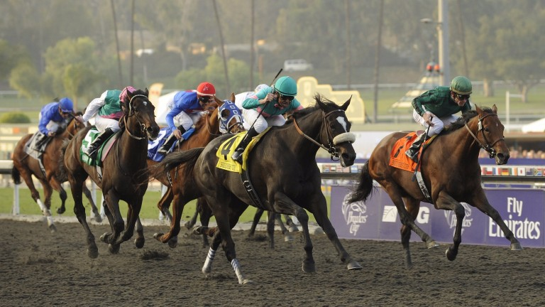 She swoops to conquer: Zenyatta (noseband) overwhelms a field of top-class males in the Breeders' Cup Classic at Santa Anita in 2009
