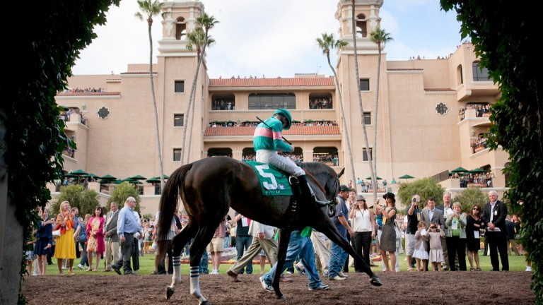 Dancing at Del Mar: Zenyatta doing her regular pre-race routine before completing a hat-trick in the Clement L Hirsch Stakes in August 2010