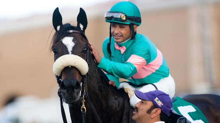 Sweet-natured she-hulk: Zenyatta and her regular jockey Mike Smith