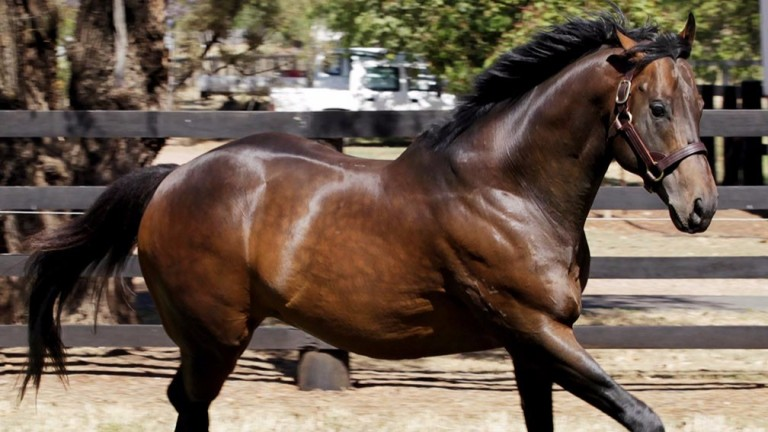 I Am Invincible: is a dominant stallion in Australia