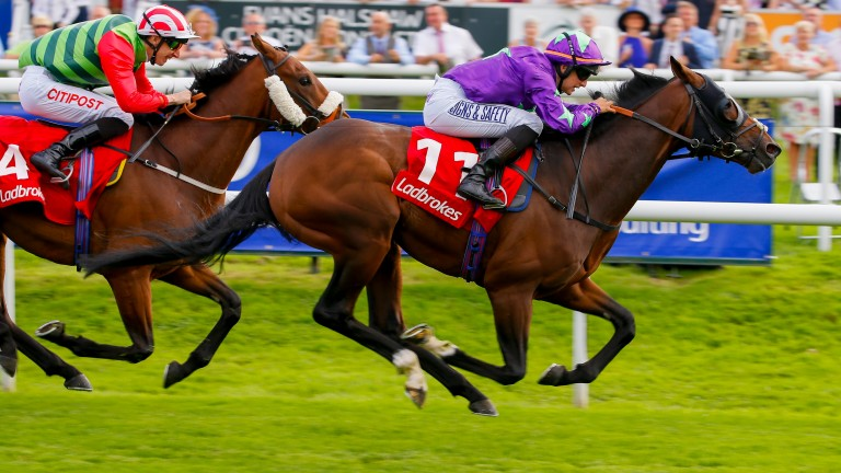 Wall of Fire: progressive handicapper heads to Nottingham