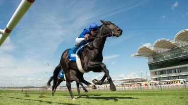 Emotionless: set to be stepped up in trip to 1m2f