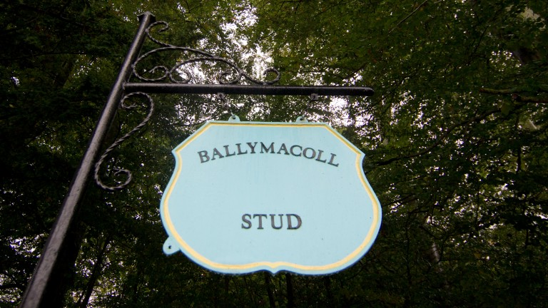 30 Group/Grade 1 winners have been bred at Ballymacoll Stud