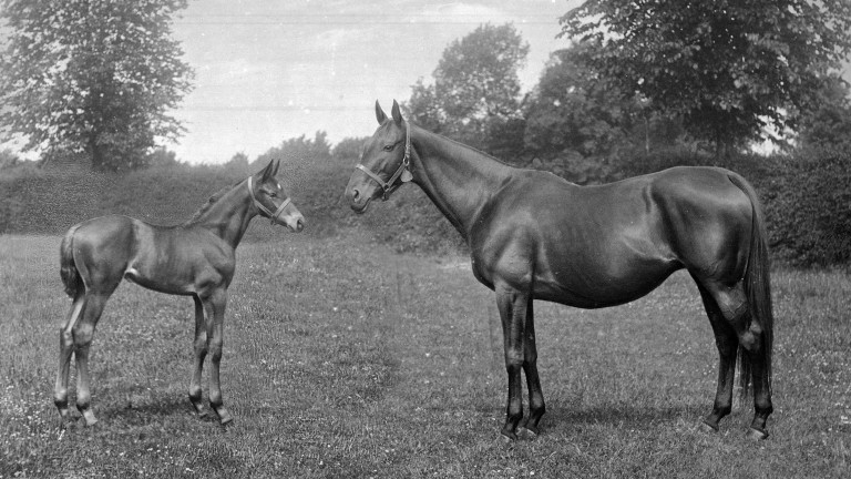 Sceptre at stud with her foal Maid Of The Mist