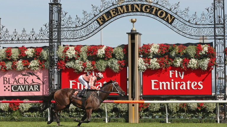 Black Caviar wins the Lightning Stakes at Flemington in 2013, part of the Global Sprint Challenge