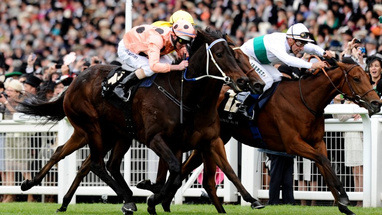 Black Caviar (salmon and black spots): narrowly holds on in the 2012 Diamond Jubilee Stakes at Royal Ascot