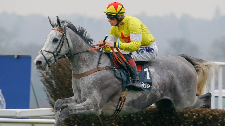 Politologue: the flashy chaser has impressed with his jumping