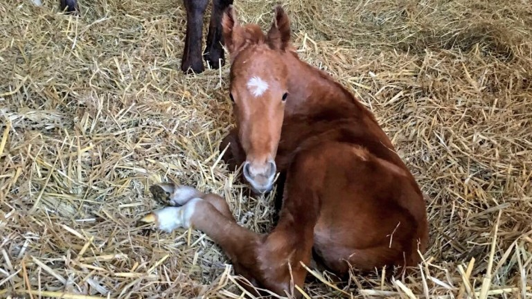 Oghill House Stud: filly foal by Night Of Thunder out of Giveupyeraulsins