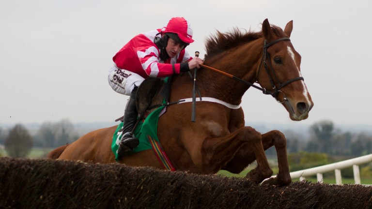 Acapella Bourgeois: makes debut for Willie Mullins on Sunday